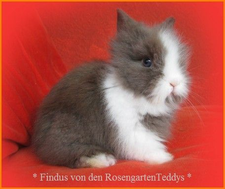Isi_Linus_30_05_09_Woche5_Findus