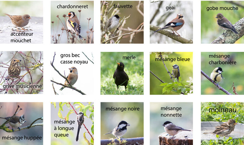 oiseaux-jardin-tous-5