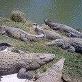 Voay - Crocos - Croc'Farm