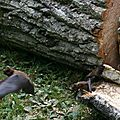 IMG_7569 a