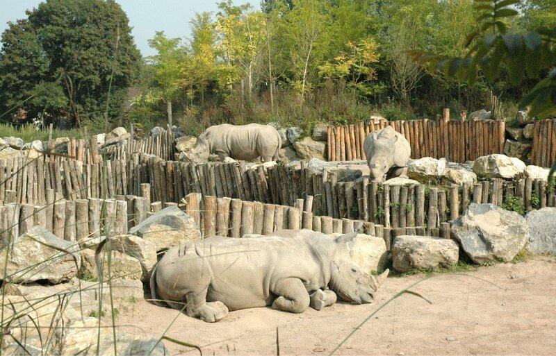 17 hippo