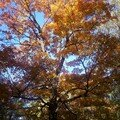 Mont royal 21oct 004