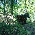 Cheval et forêt 07 - benoit chomel - ardèche