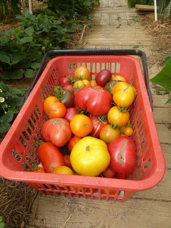 5-tomates (1)
