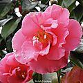 1-Nuages, Poney et Fleurs de Léon 210217