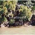 rivière du sud est-estuaire_124