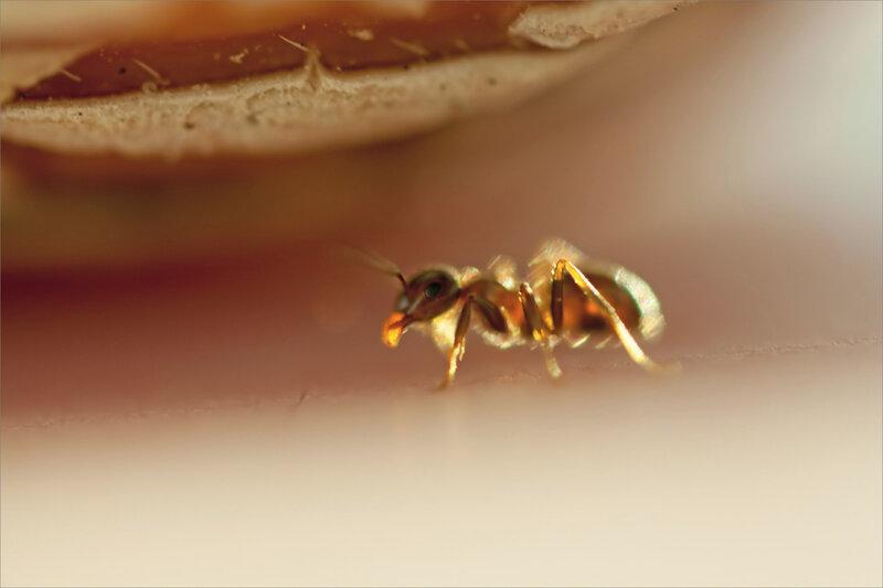 SM fourmis melon 280719 ym 12 transport contrej