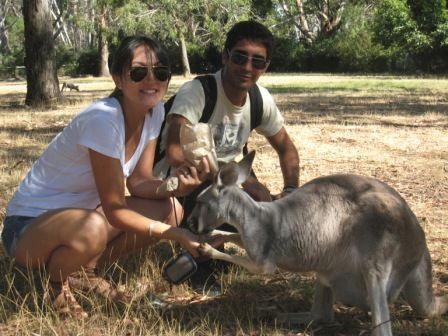 7___Ils_sont_trop_chou_ces_kangourous