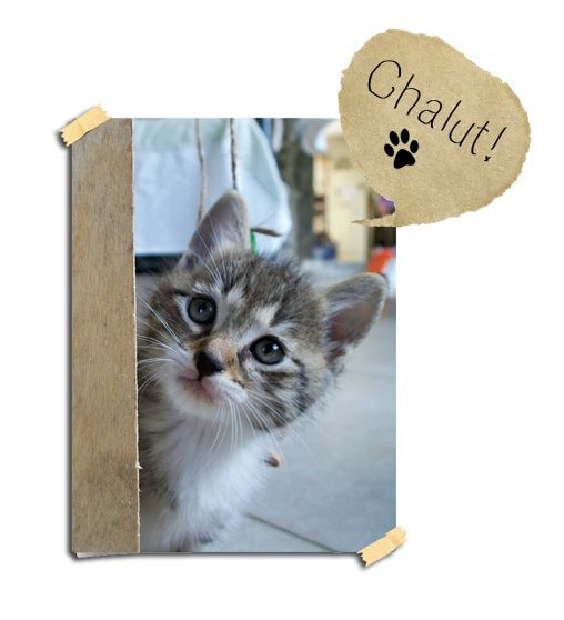 Topic des chats - Page 23 74336715