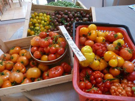 10-tomates du jour-13