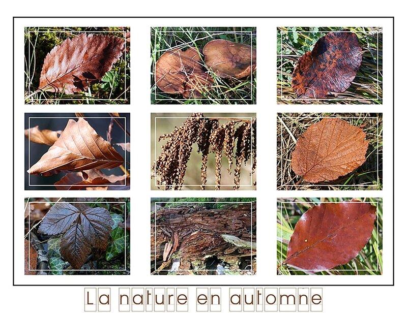 la-nature-en-marron-1800-