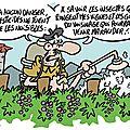 Buvez des vignes...