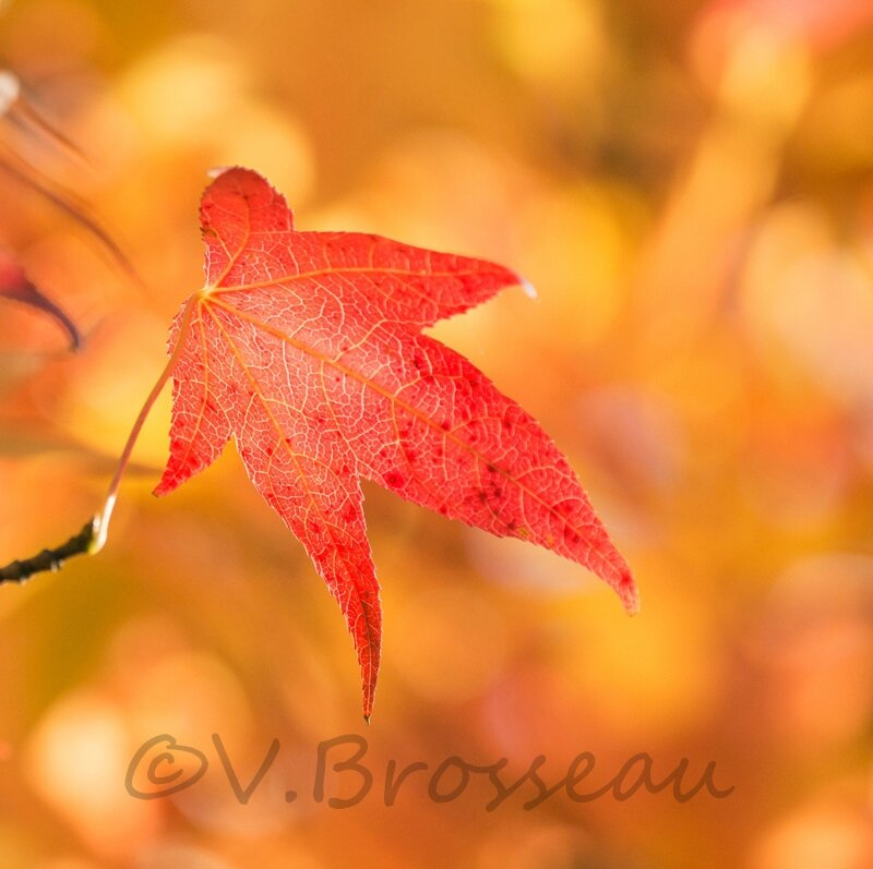 feuille-automne13-04