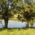 Vensat étang