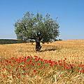 Radiquero, Aragon (Espagne)