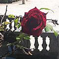 Bouquet du we précisions