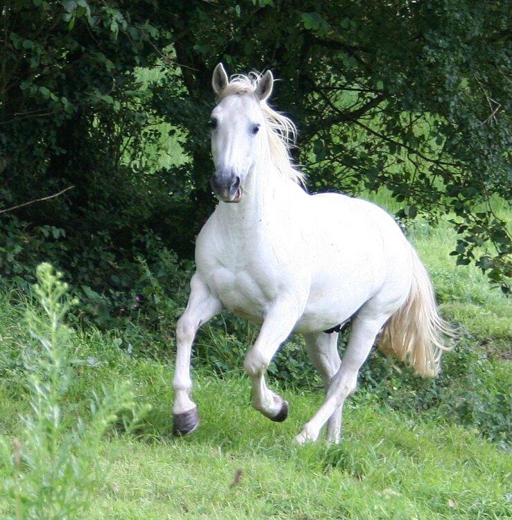 cheval-blanc-1028122711-1176722