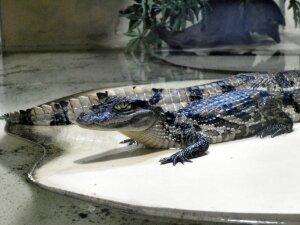 Grand Aquarium de Touraine (8)