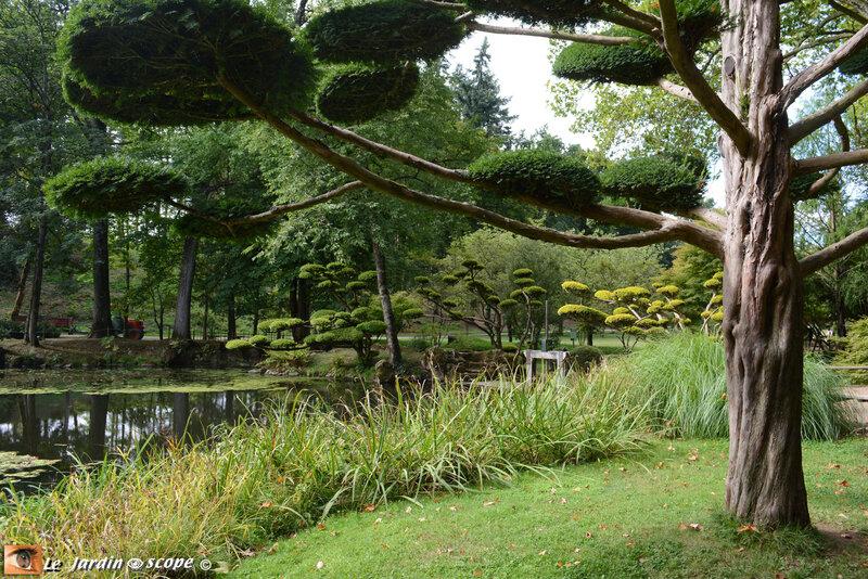 PAT_0942 Parc Oriental de Maulévrier