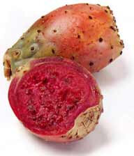 Prickly_pear_CDC