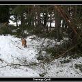2009 01 21 Paysage désastreux, arbre cassés a cause du poid de la neige fin décembre