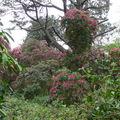 Howth, les jardins du chateau