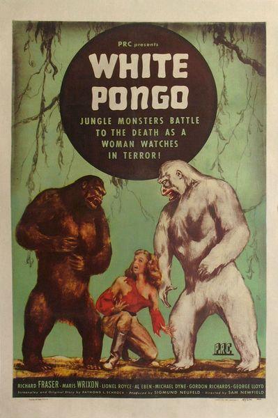 white-pongo2