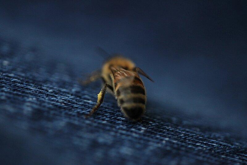 L'abeille aime le 501