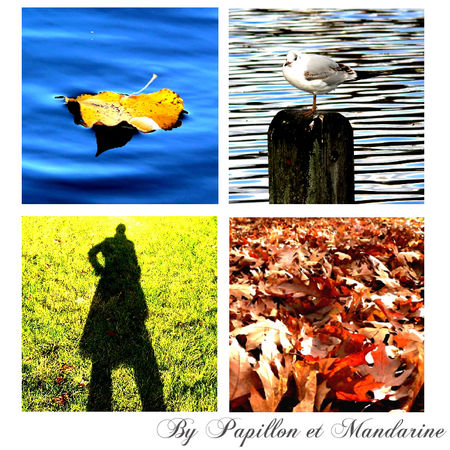 Essai_automne_Constrate_forc_