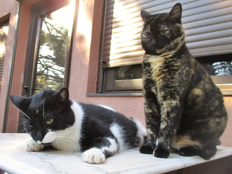 Les chats Figaro & Jeannette (photo C.F)