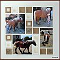 Soigner et monter les chevaux