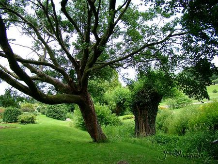arbres_pont