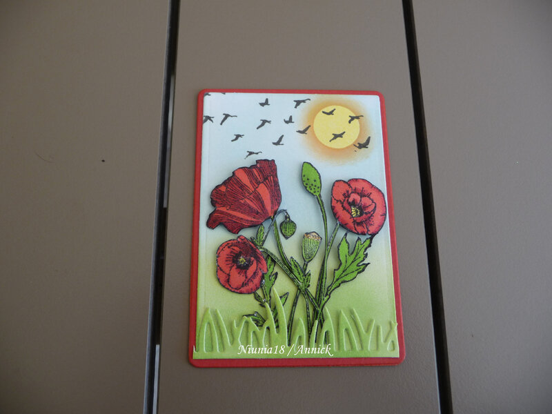 Coquelicot N°2 (1)