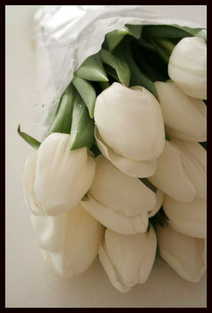 tulipes_blanches_2