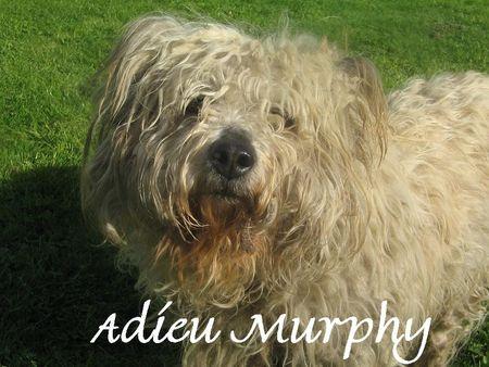 Murphy_au_jardin_004