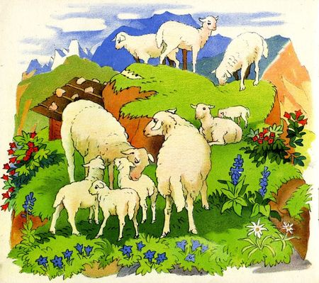 moutons_montagne_edelweiss
