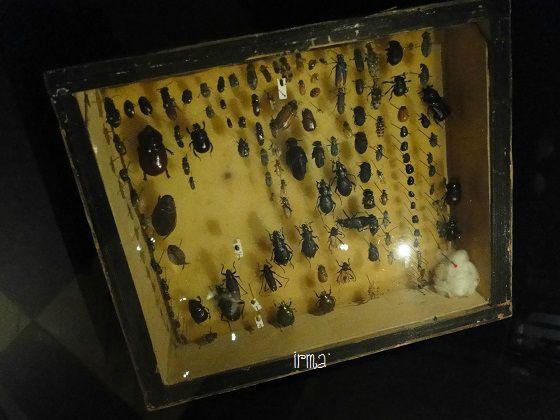 DSC02048 musée buffon à montbard
