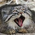 chat palace cat
