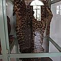 trophées de chasse au musée de Jinka