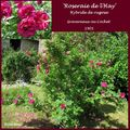 Rose ancienne : 'Roseraie de l'Hay'