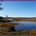 Roselière Lac d'Aureilhan