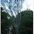 Tree's love