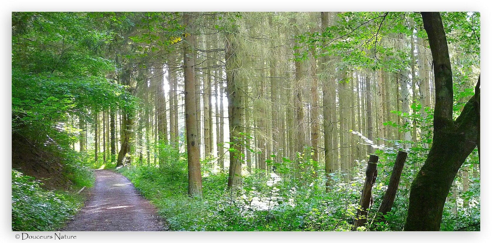 Le chemin, dans la forêt