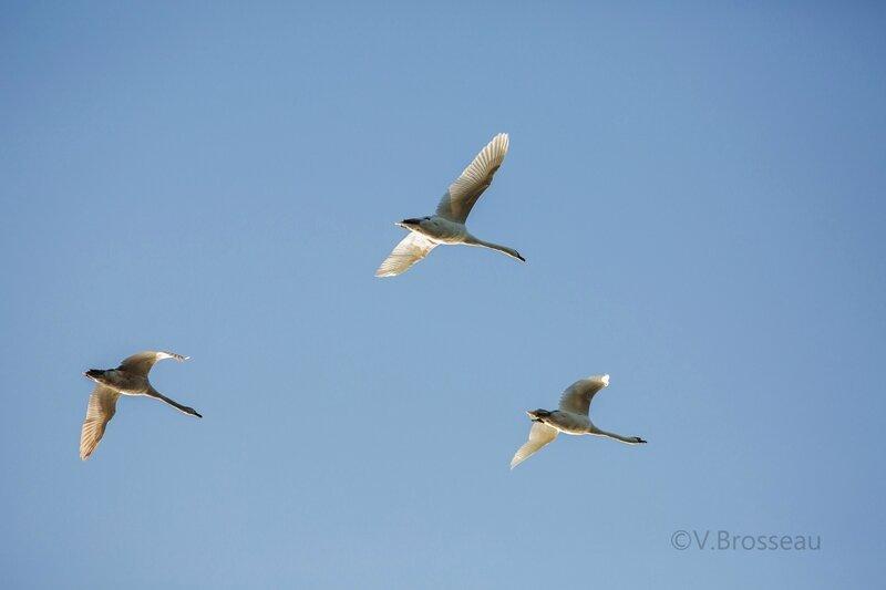 bord-de-loire-oiseau15-04