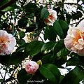 Fleurs de Léon et Lune 180219