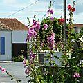 Juillet 2010 Mariage Blandine-Oléron-Gap 451