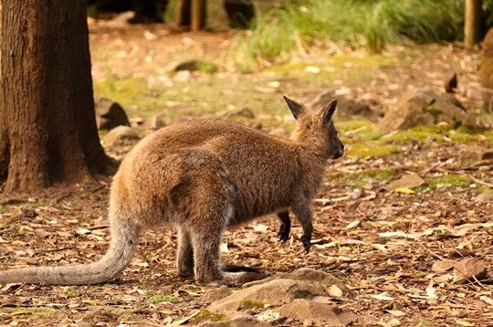 Tasman peninsula18