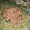 les moules recouvertes d'aiguilles de pins(ramassées sur l'ile d'oléron)