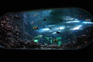 le bassin aux requins