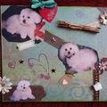 Un petit hommage à lili qui est au paradis des chiens